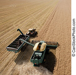 Combine and Grain Cart - Combine harvesting a canola field...