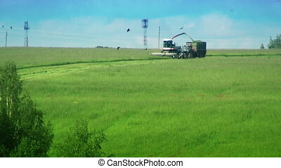 Combine and tractor in the field. Harvesting Green grass. HD...