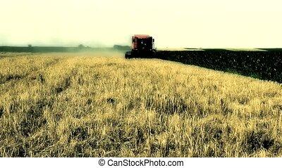 combine dark - combine harvest in the wheat field