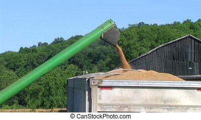 Combine Emptying Wheat 02 - Wheat emptying out of combine...