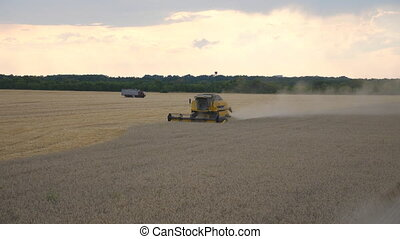 Combine gathering crop of ripe wheat in countryside....