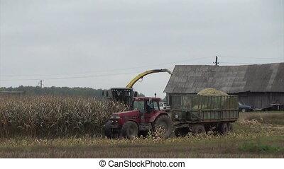 combine harvest corn - Combine harvester load ripe corns...