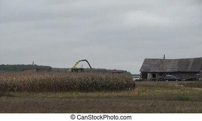 combine harvest corn - Combine harvester loads ripe corns...