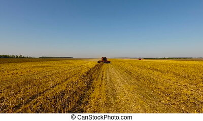 Combine harvest sunflower during the day. Aerial shoot. In...