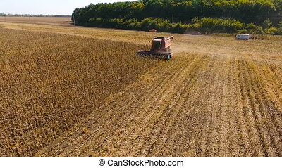 Combine harvest sunflower during the day. Aerial shoot.