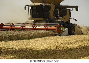 Combine harvester agriculture machine harvesting golden ripe wheat field. Agriculture. Combine harvester harvesting wheat with dust straw in the air. Heagy agricultural machinery.