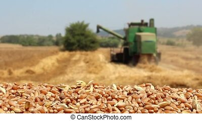 combine harvester and wheat seeds
