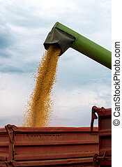 Combine harvester auger unloading harvested corn into tractor trailer