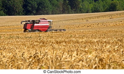 Combine harvester back in wheat field at hot summer time
