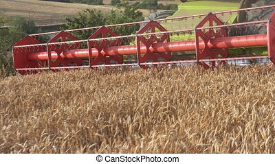 Combine harvester close up. Harvester, harvesting wheat. -...