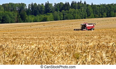 Combine harvester front in wheat field at hot summer time