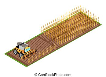 Combine Harvester Gathering Wheat on Field Vector