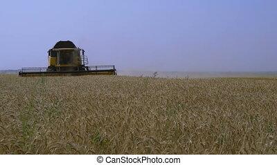 Combine-harvester gathers the wheat - Combine-harvester...