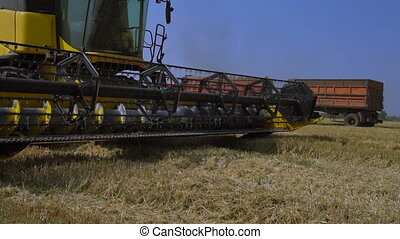 Combine-harvester removes the grain of wheat in the field. Slow Motion