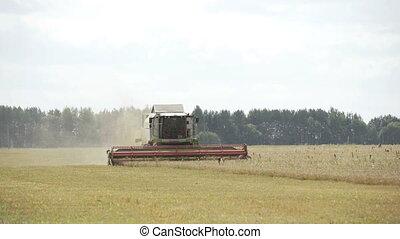 Combine harvester. Harvest of field. Industrial background...