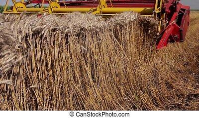 Combine harvester harvest ripe wheat - Agricultural combine ...