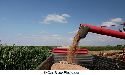 Combine harvester harvest ripe wheat. - Agricultural ...