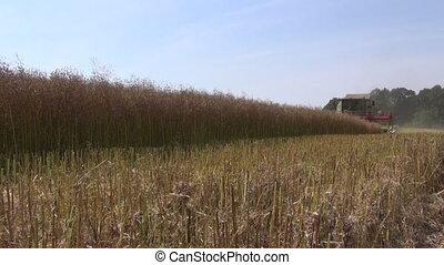combine harvester harvesting wheat - combine harvester...