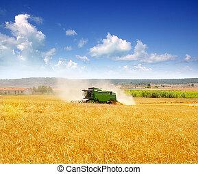 Combine harvester harvesting wheat cereal in farm