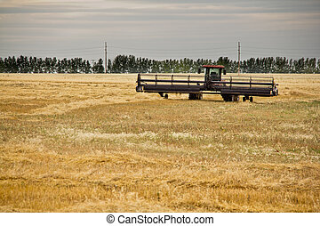 Combine harvester in a wheat field - A Combine harvester in...