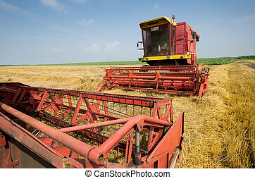 Combine harvester in barley field