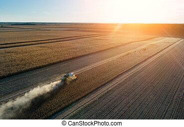 Combine harvester in soybean field