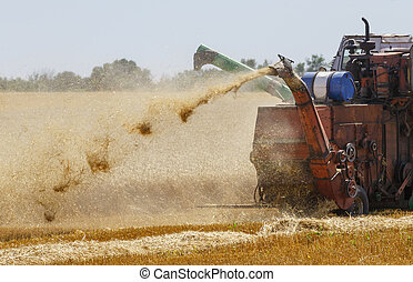 Combine harvester is working in the field, gathering the wheat