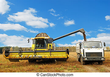 yellow combine harvester in the field of buckwheat loading truck body in the field over bright cloudy blue sky