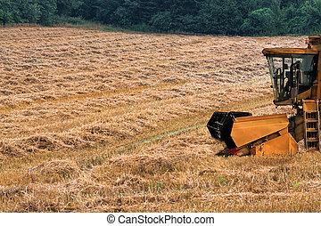 Combine harvester on a mowed cornfield