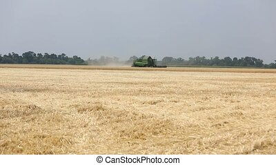 Combine harvester on the wheat field, Green harvester working on the field, view on the combines and tractors working on the large wheat field
