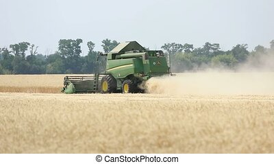 Combine harvester on the wheat field, Green harvester working on the field