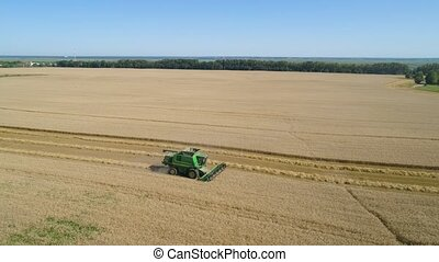 Combine harvester on wheat field - Combine harvester at work...
