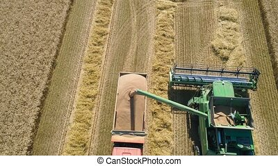 Combine harvester on wheat field