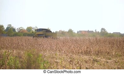 Combine-harvester picking Corn in the field. Mechanical...
