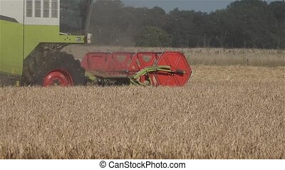 Combine harvester reaping wheat in the summer
