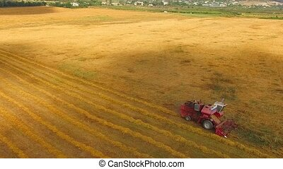Combine harvester rides the field and collects wheat....