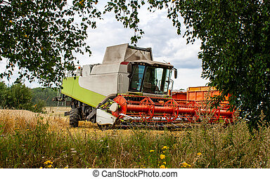 Combine harvester stands between trees wheat field