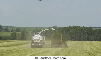 Combine harvester transferring freshly harvested herb to...
