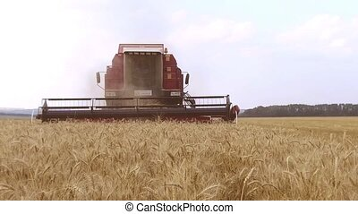 Combine harvester. Wheat harvesting shearers. Wheat is...