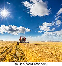 Combine harvester working - combine harvester working on a...