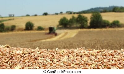 combine harvester working in wheat