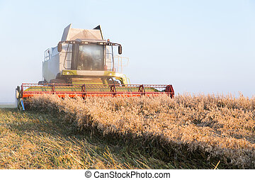 combine harvester working on a oat field