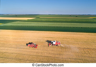 Combine harvesters working in wheat field