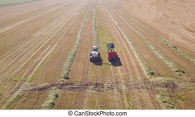 Combine harvesting a field and unloads wheat for Silage over a trailer cart.