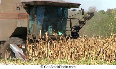 Combine Harvesting Corn 02 - Combine harvesting corn crop,...