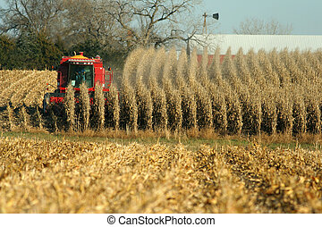 combine harvesting corn, autumn in Nebraska
