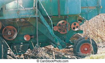 Combine harvesting dry sunflower. Old agricultural harvester...