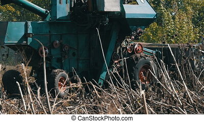 Combine harvesting dry sunflower. Old agricultural harvester...