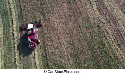 Combine harvesting equipment rides on field with cereals....