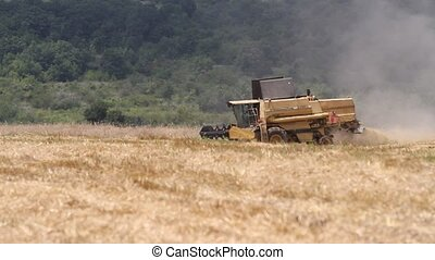 Combine harvesting grain in the field